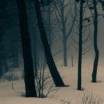 nature-late-winter-48