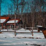 Maison Canadienne et Chevaux
